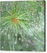 Sparkly Pine Acrylic Print