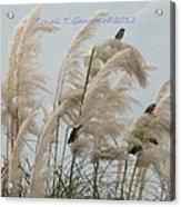 Sparrows In Breeze Acrylic Print