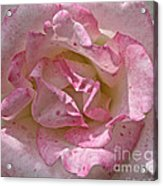 Spattered Pink Promises Acrylic Print