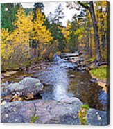 Special Place In The Woods  Acrylic Print