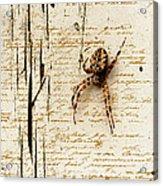 Spider Letter Acrylic Print by Yvon van der Wijk