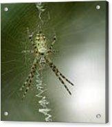 Spider Acrylic Print by Odon Czintos