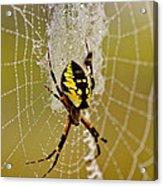 Spider Power Acrylic Print
