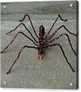 Spider Acrylic Print by Scott Faucett