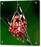 Spider Weaving Acrylic Print