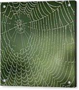 Spider Web Acrylic Print