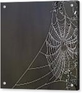 Spider Web Covered In Dew Drops Acrylic Print