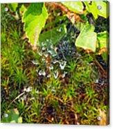 Spider Webs At The Farm Acrylic Print