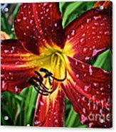 Spiderman The Day Lily Acrylic Print