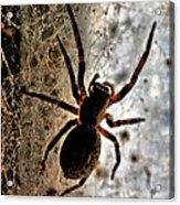 Spiders Home Acrylic Print