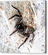 Spiders Trap Acrylic Print