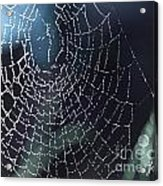 Spiderweb Blues Acrylic Print by Artist and Photographer Laura Wrede