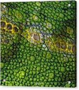 Spiny Desert Rhinoceros Chameleon Acrylic Print