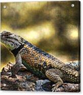 Spiny Lizard Acrylic Print