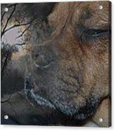 Spirit Of The Dog Acrylic Print