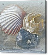 Spirit Of The Sea - Seashells And Surf Acrylic Print