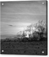 Spirit Trees Sparkle Acrylic Print
