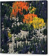 Splashes Of Fall Acrylic Print