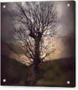 Spook-tree Acrylic Print