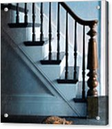 Spooked Cat By Stairs Acrylic Print