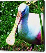 Spoonbill Number One Acrylic Print by Doris Wood