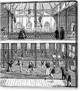 Sports: Gymnastics, 1859 Acrylic Print