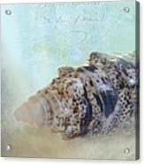 Spotted Auger Seashell Acrylic Print by Betty LaRue