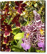 Spotted Flowers Acrylic Print by Silvie Kendall