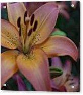 Spotty Lily Acrylic Print
