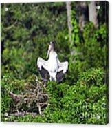 Spread Stork Acrylic Print