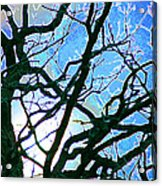 Spring Approaches Acrylic Print