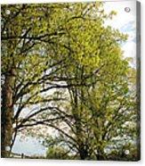 Spring Awaits Acrylic Print