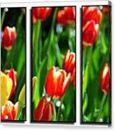 Spring Beauty Triptych Series Acrylic Print