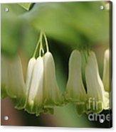 Spring Bells Acrylic Print