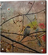 Spring Bird Acrylic Print