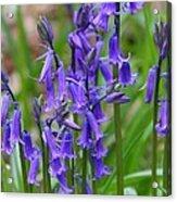Spring Blue Acrylic Print