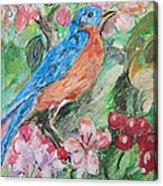 Spring Bluebird Collage Acrylic Print
