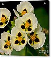 Spring Color Acrylic Print