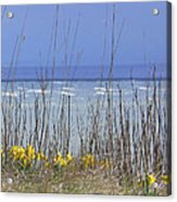 Spring Comes To The Cape Acrylic Print