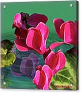 Spring Cyclamen Acrylic Print