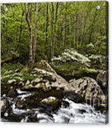 Spring Dogwoods On The Little River - D003829 Acrylic Print