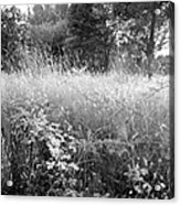 Spring Field Black And White Acrylic Print