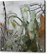 Spring Flowers In Ice Storm Acrylic Print