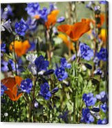 Spring Flowers  Acrylic Print