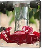 Spring Hummingbird At Feeder Acrylic Print