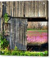 Spring In Kentucky Acrylic Print