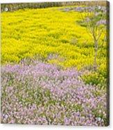 Spring In Spain Acrylic Print