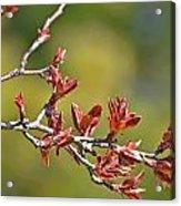 Spring Leaves Greeting Card Blank Acrylic Print
