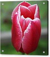 Spring Life Acrylic Print