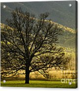 Spring Morning In Cades Cove - D003803a Acrylic Print